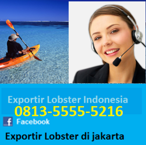 harga lobster mutiara_supplier lobster_agen_jual_beli_lobster, Bisnis Lobster Laut